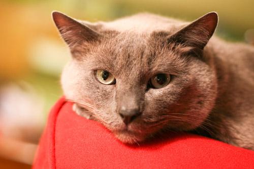 cats-55